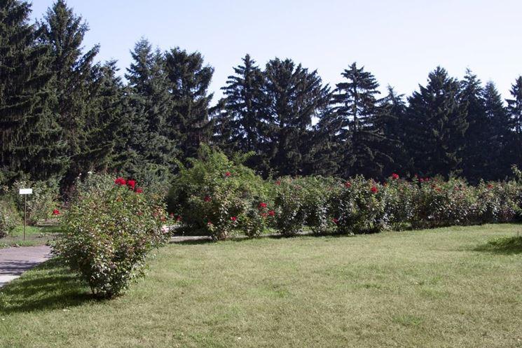 giardino con siepi di roseti