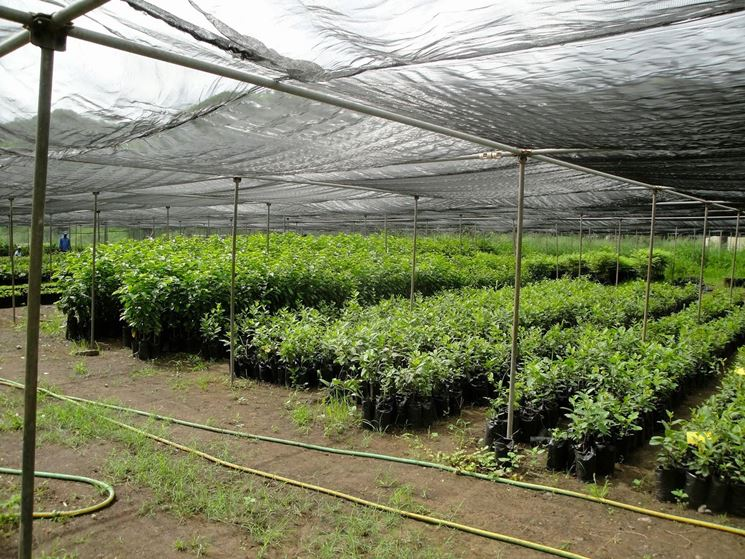 vivaio di piante da giardino