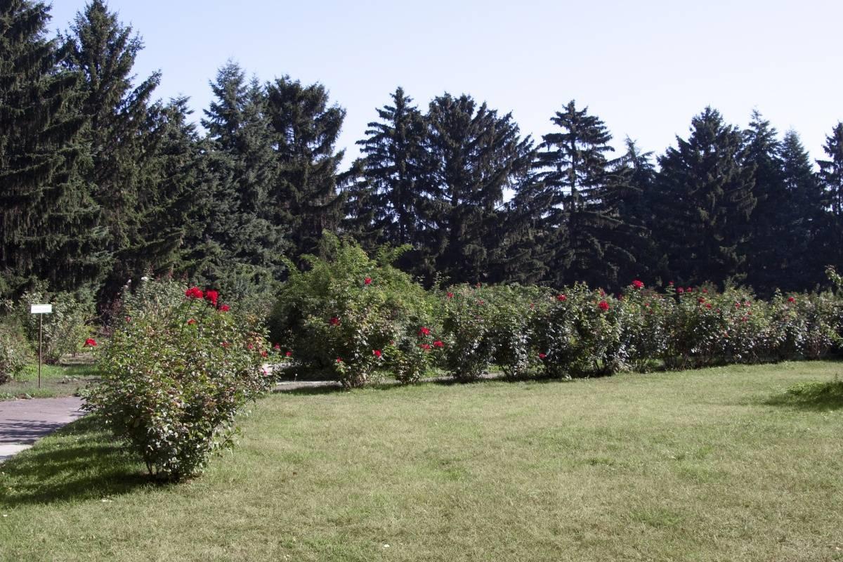 Piante per siepi sempreverdi: le siepi speciali coltivare.