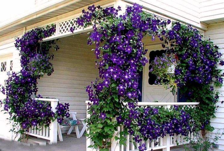 casa con rampicante sempreverde