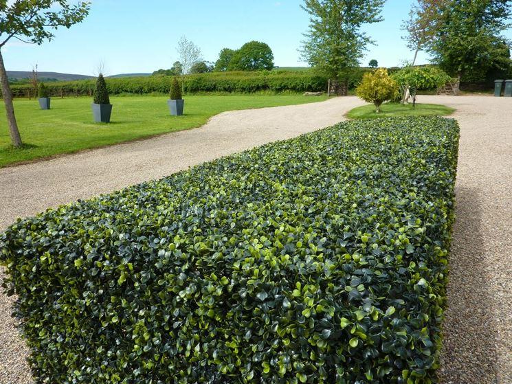 Siepe sintetica siepi giardino con siepe sintetica for Siepe sintetica artificiale