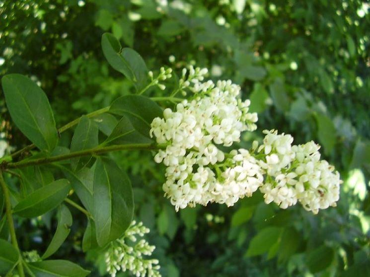 fiori cascanti crescita veloce ~ dragtime for . - Fiori Cascanti Crescita Veloce