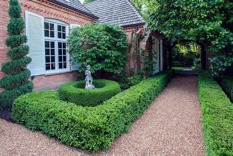 Siepi basse siepi caratteristiche delle siepi basse for Siepi da giardino sempreverdi