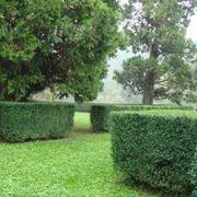 Siepi di bosso basse utilizzate per delimitare aree erbose