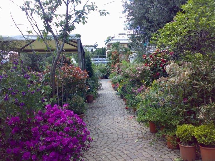Siepi Da Giardino Fiorite : Siepi con fiori siepi siepi fiorite