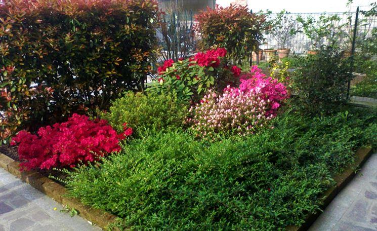 Siepi con fiori siepi siepi fiorite for Siepe sempreverde