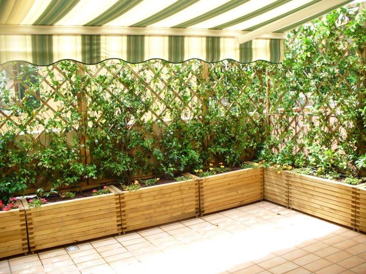 Siepi da balcone siepi caratteristiche delle siepi per - Siepi ornamentali da giardino ...