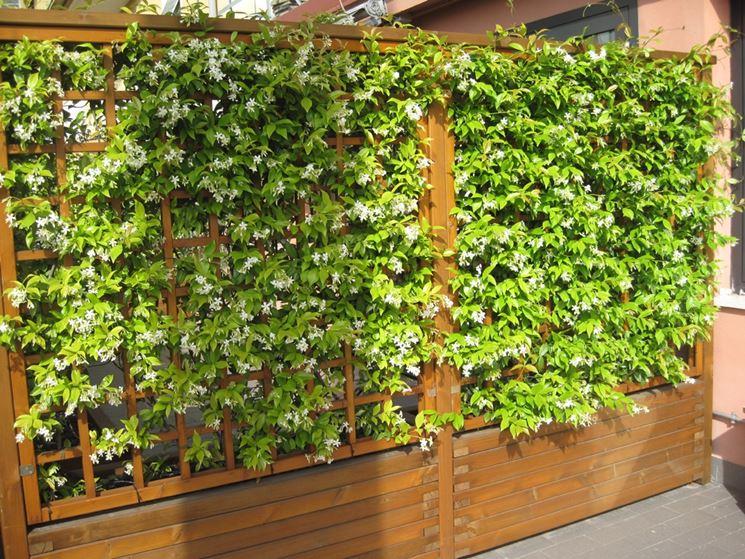 Siepi da balcone siepi caratteristiche delle siepi per for Piante per terrazzi