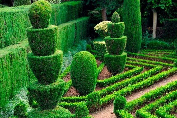Siepi da giardino sempreverdi siepi siepi giardino for Bosso siepe