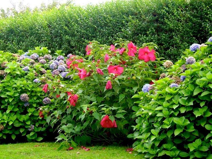siepi miste fiorite
