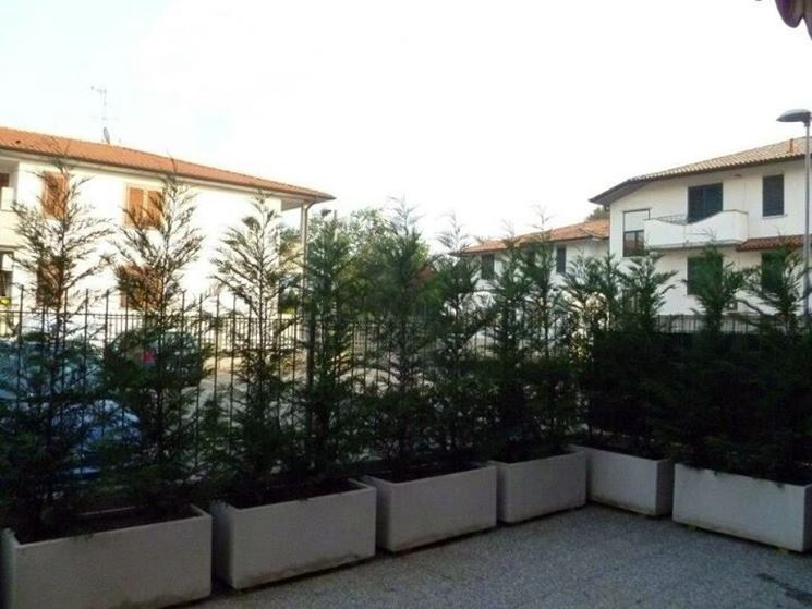 Siepi per terrazzi siepi terrazzi con siepi - Piante sempreverdi per terrazzi ...
