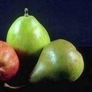 innesti piante da frutto