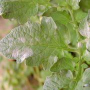 malattie piante