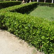 divisori per giardini