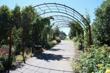 Griglie per rampicanti grigliati e frangivento - Archi per giardino ...