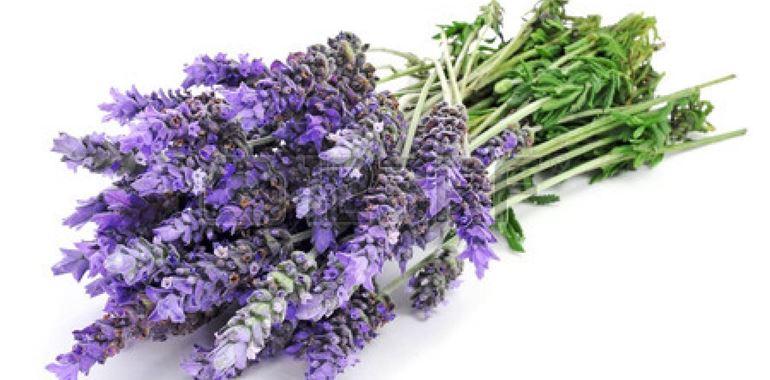 <h6>Coltivare Lavanda</h6>Il suo profumo e il suo colore la rendono una pianta unica, preziosi consigli per prendersi cura della vostra lavanda.