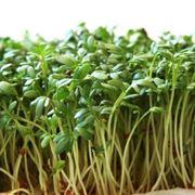La pianta del crescione