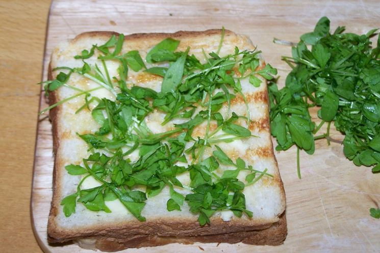 Toast al formaggio e crescione