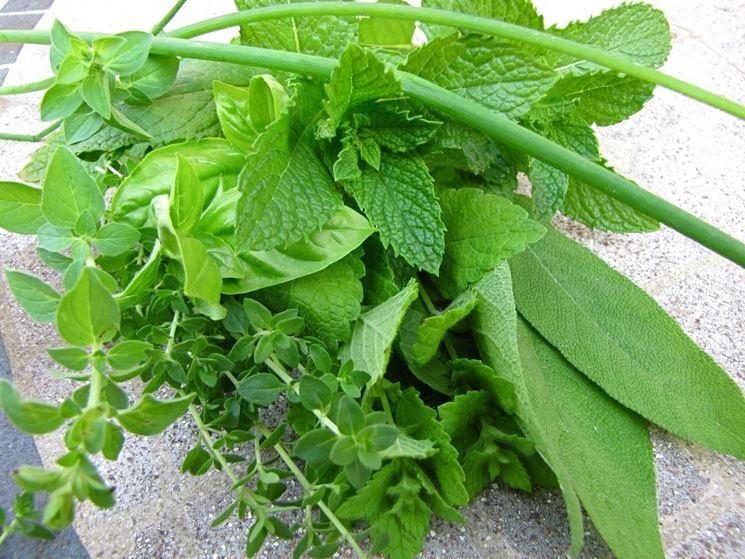 Mazzetto di erbe aromatiche