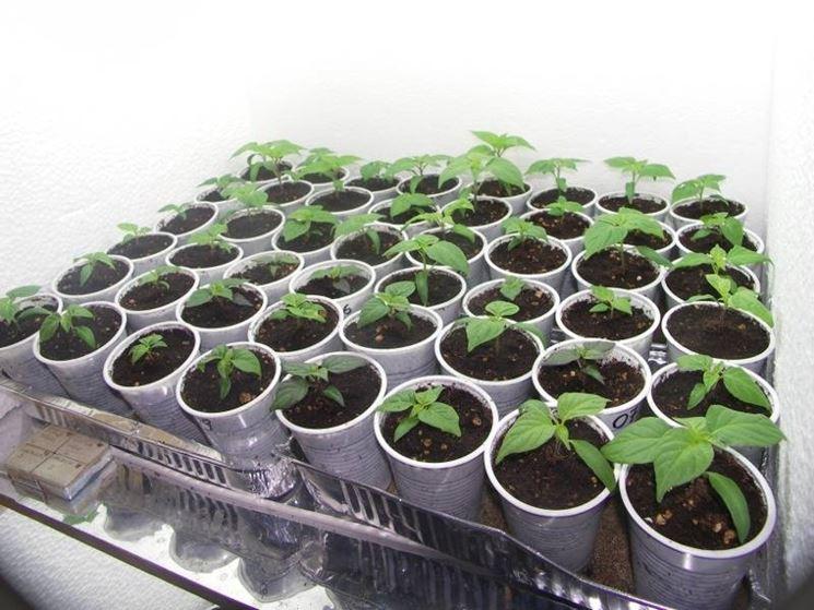 coltivazione artigianale