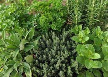Principali piante aromatiche