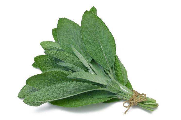 Salvia. Altra pianta aromatica