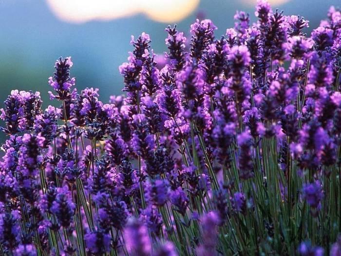 Piante aromatiche - Aromatiche - Piante aromatiche ...