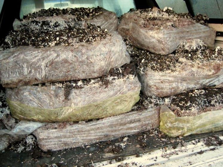 Ballette di funghi
