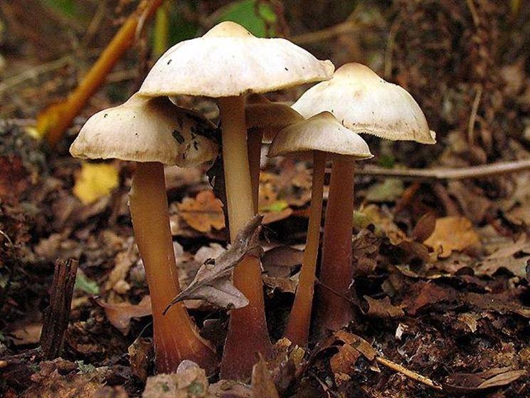 Esemplari di funghi