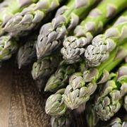 pianta asparago