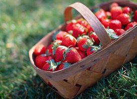 Coltivazione fragola