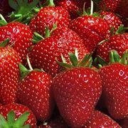 coltivare fragole