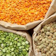 coltivare lenticchie