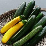 piantare zucchine