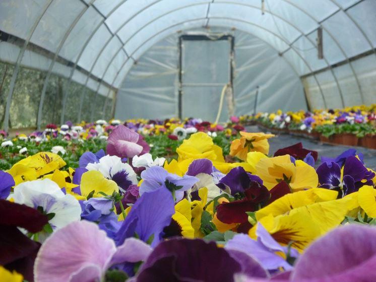 Buone attrezzature e ottima organizzazione consentono di coltivare qualunque pianta in serra