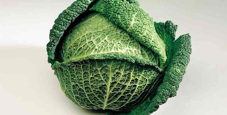 Come creare l 39 orto invernale ortaggi orto invernale for Piante classificazioni inferiori successive