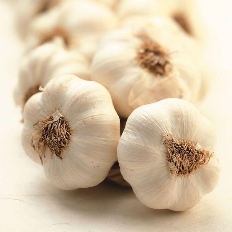 Treccia di aglio