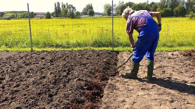 Contadino fertilizza l'orto