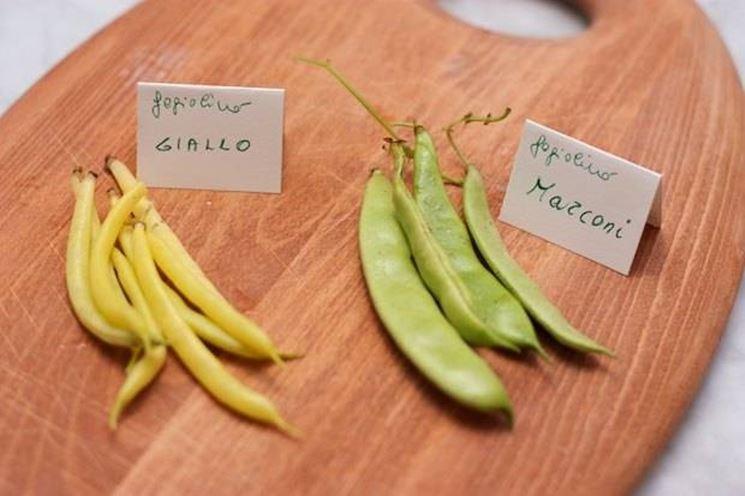 Tipologie di fagiolini