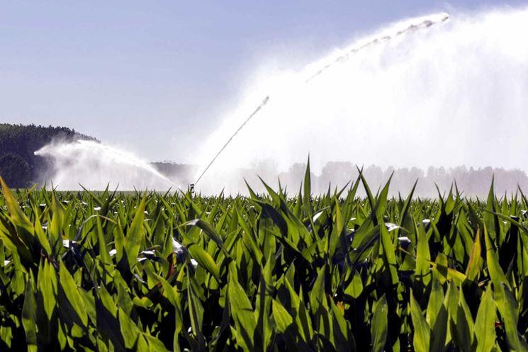 Come irrigare il granoturco