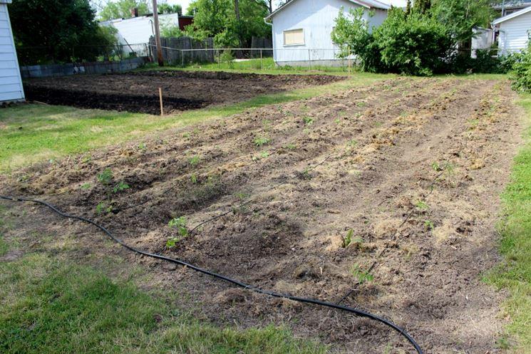 Impianto irrigazione pomodori