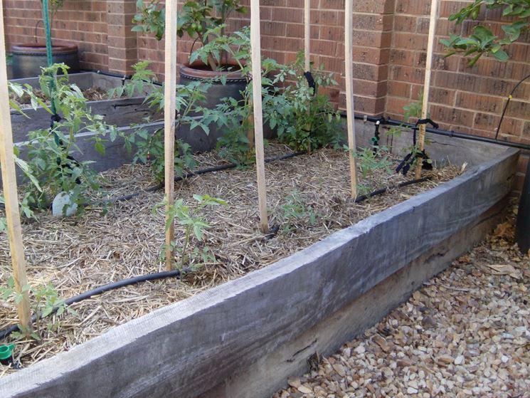 Aiuola pomodori irrigazione
