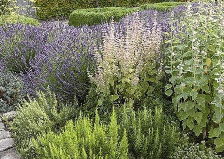 Le piante aromatiche ornamentali nel mio giardino - Piante da giardino ornamentali ...