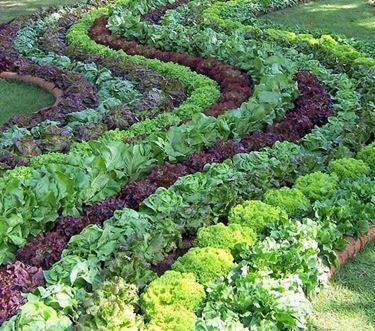 Dettaglio di un orto giardino