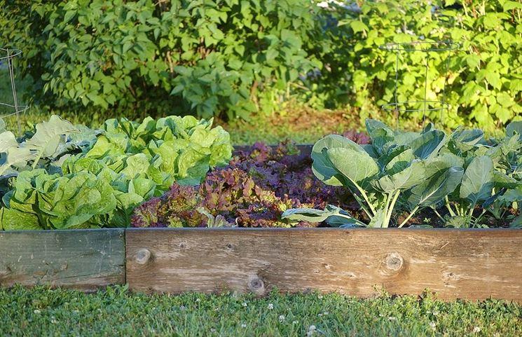 Orto giardino in piena produttività