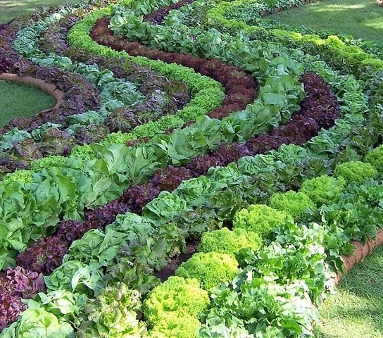 Orto giardino ortaggi orto per il giardino - Disegnare un giardino ...