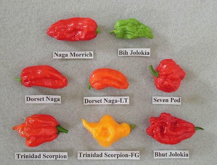 Alcune varietà di peperoncini