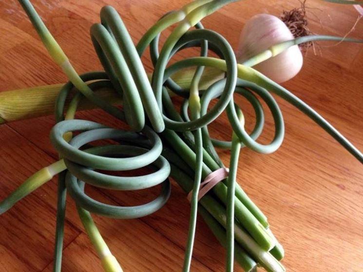 particolare foglie della pianta d'aglio
