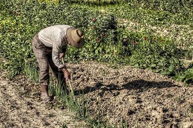 contadino che ara un campo