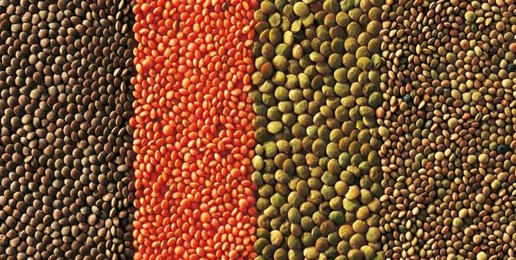 Le diverse qualità della lenticchia